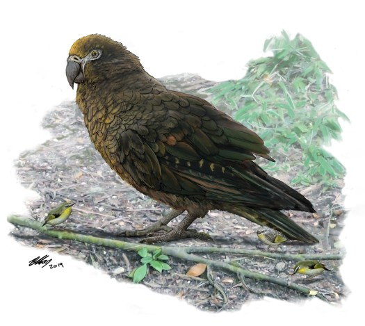 Artist's impression of the giant parrot. Credit - The Conversation