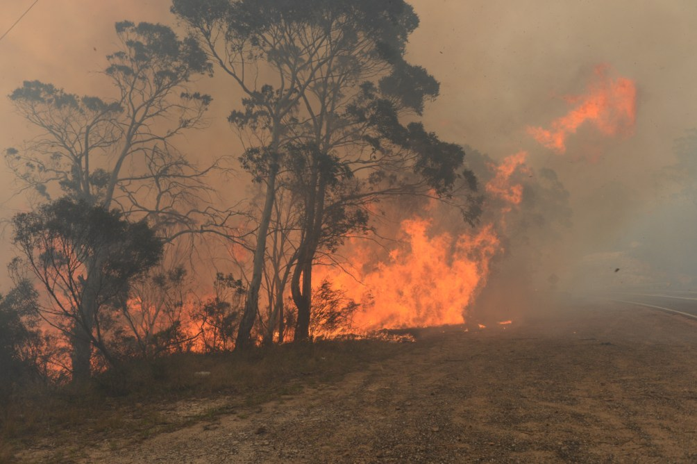 Sydney Fires Caused By People And Nature