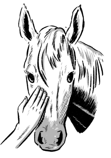 Hand gently pats a horse's nose