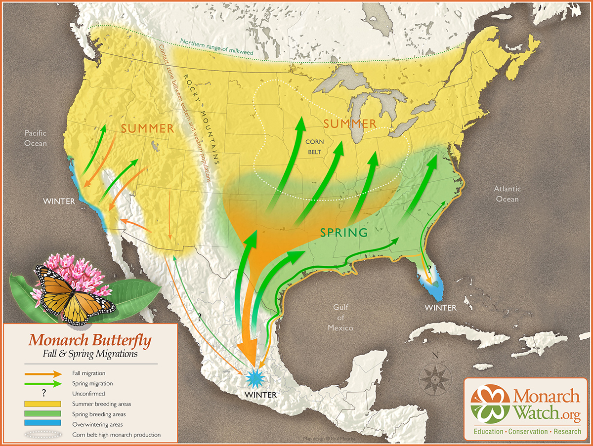 Map of North America showing monarch migration routes.
