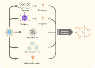 from adenoviruses to rna the pros and