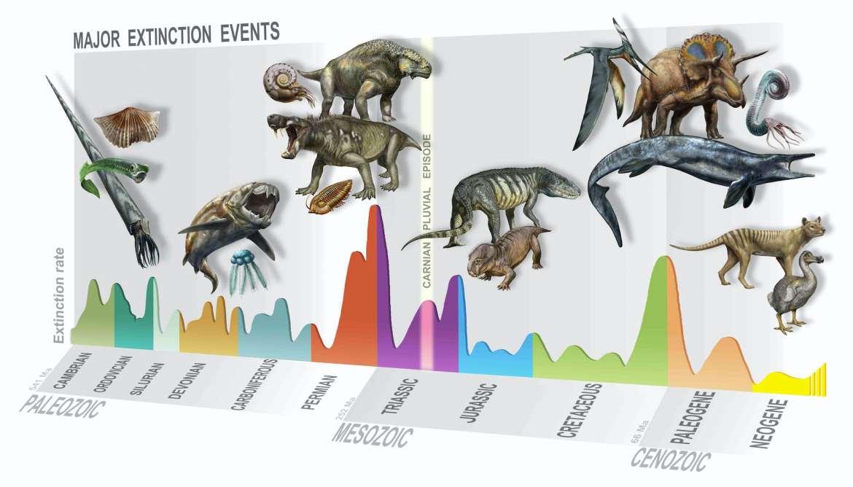 Timeline illustration of mass extinction events
