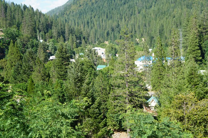 Forest in mountainous area encroaching close to homes.