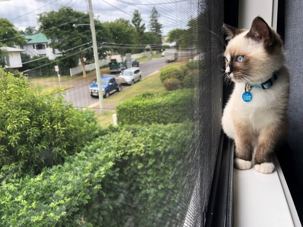 A cat sits on the windowsill, looking out onto the street.