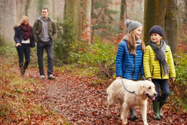 عائلة تمشي مع كلبها في الغابة خلال فصل الخريف.