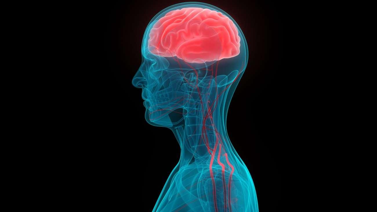 Un'illustrazione del cervello di una persona e dei vasi sanguigni ad esso collegati.