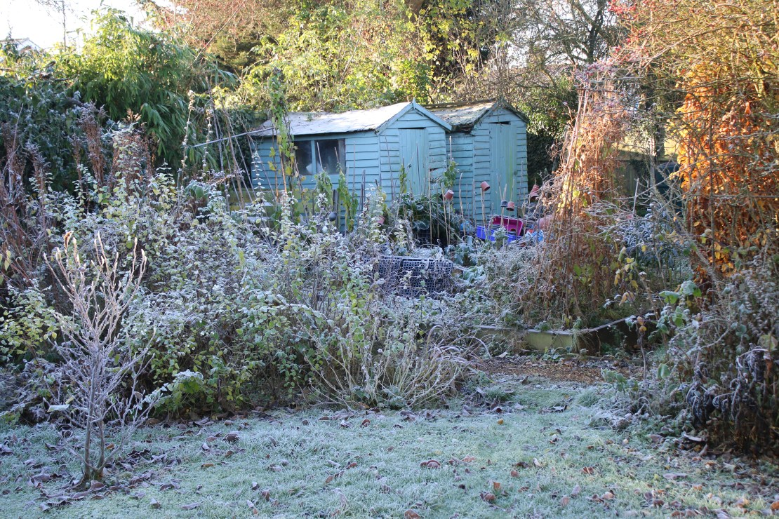 Two sheds in a frosty sunlit allotment garden.