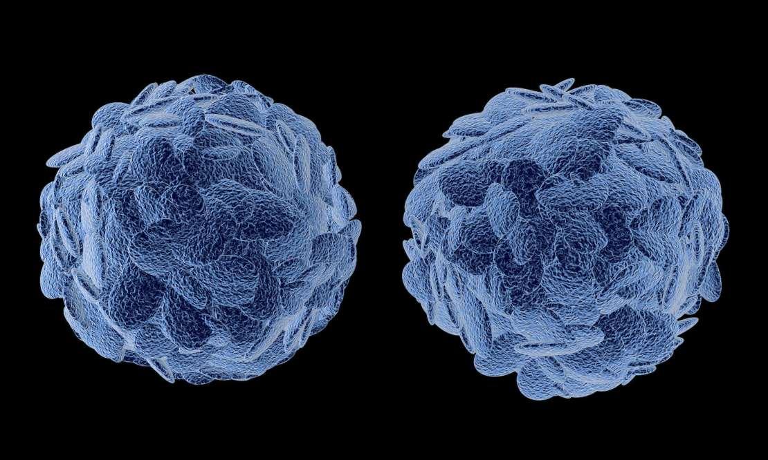 An image of regulatory T cells.