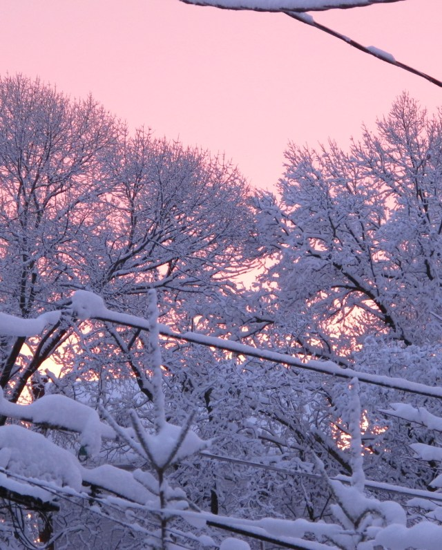 Snow-coated tree branches against sunset sky.