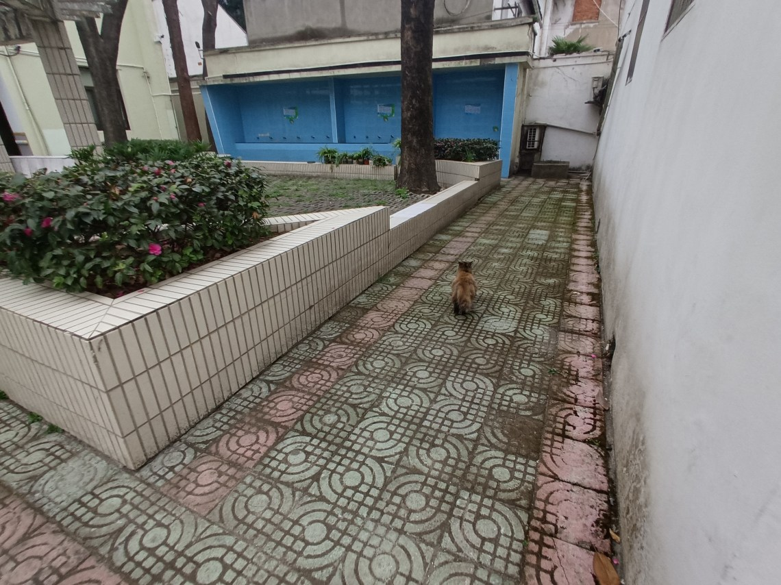Interior courtyard of a house in Suzhou, China with tiled area surrounding a shrub.