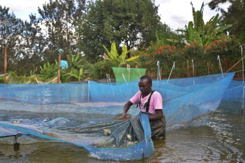 Every person on earth needs water to survive. Farming Fish In Fresh Water Is More Affordable And Sustainable Than In The Ocean