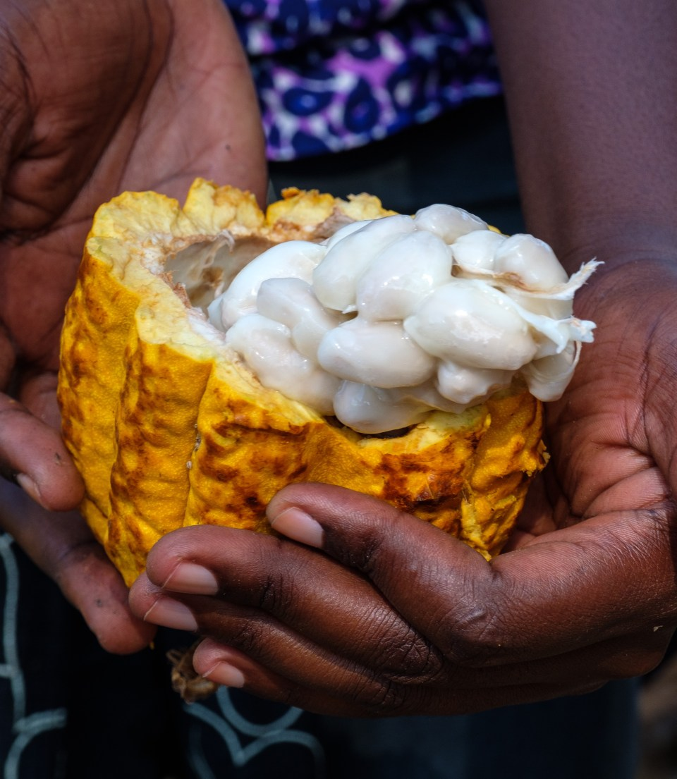 woman holds a halved pod displaying the seeds