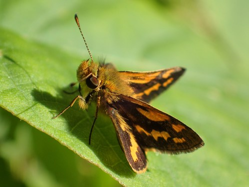 Orange and black butterfly on a green leaf