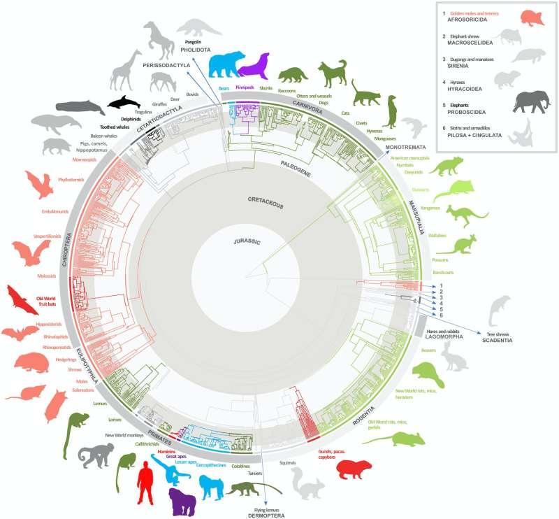 Evolutionary tree of mammals and brain sizes