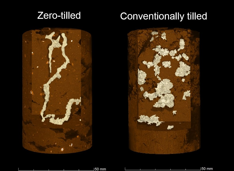 X-ray scans comparing a soil core from a field with conventional tilling, versus one with no tilling.
