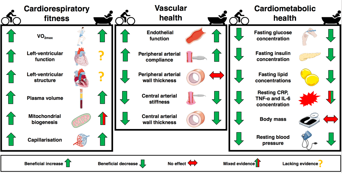 Diagram showing health functions that improve with bathing/exercise.