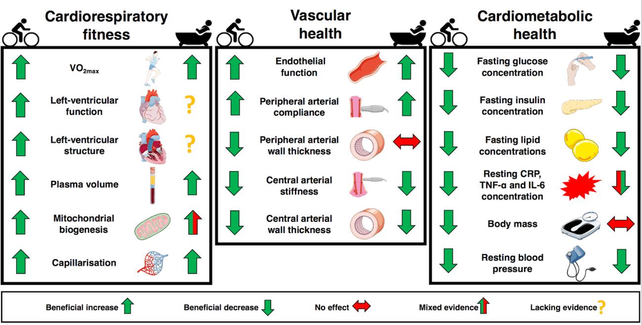 Diagramma che mostra le funzioni sanitarie che migliorano con il bagno / esercizio.