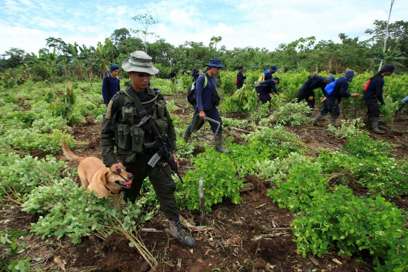A Colombian soldier with a dog patrols past civilians tearing up coca plants  in Putumayo on Colombia's border with Ecuador