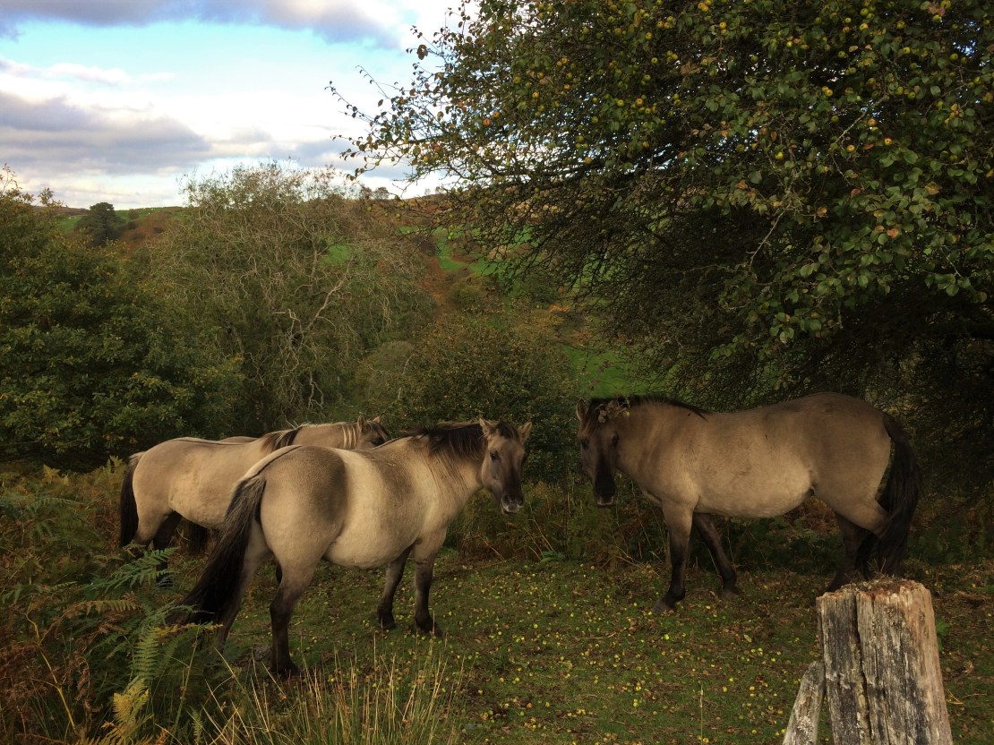 Three wild horses in a clearing.