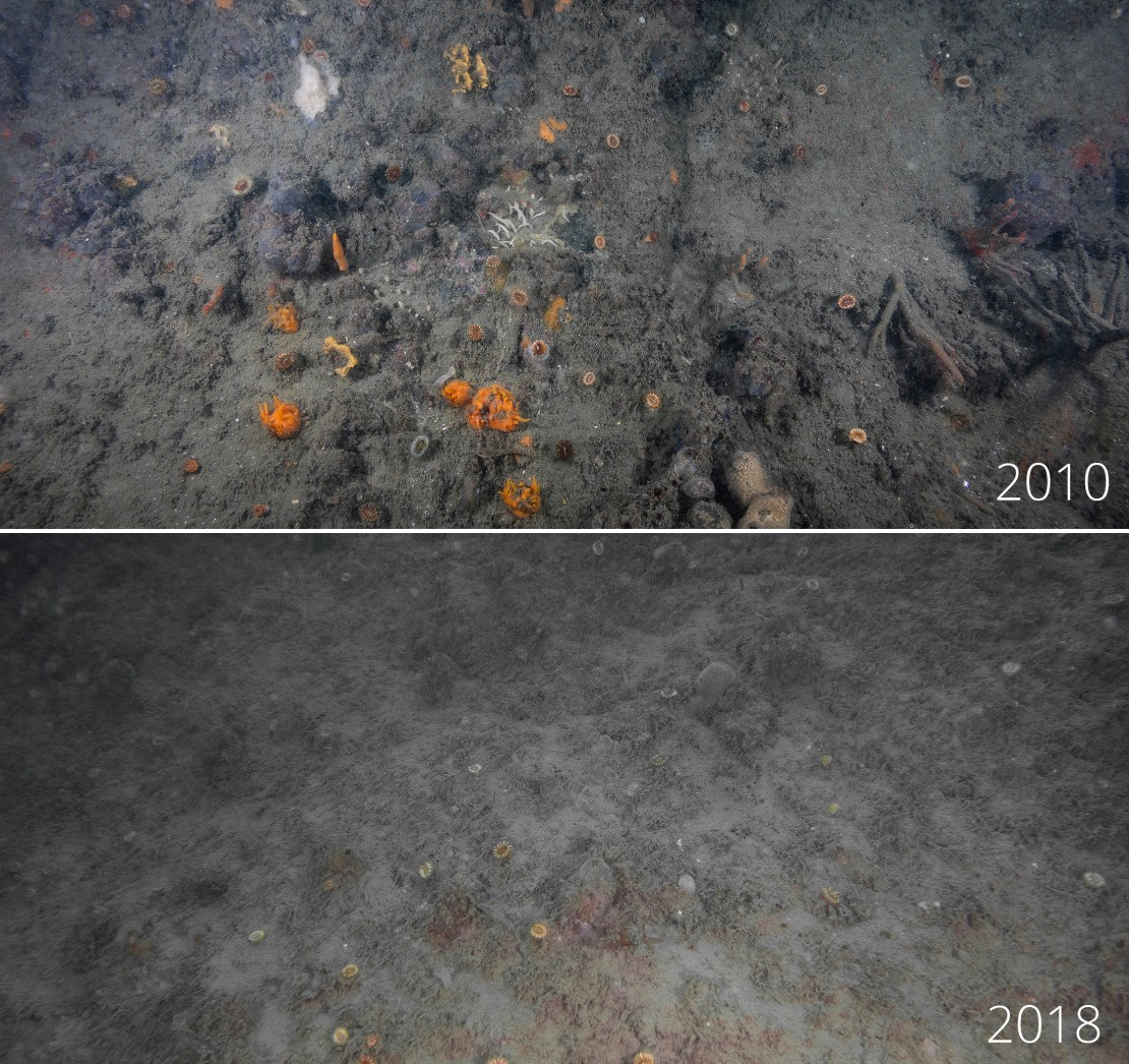 A before and after shot of a rocky surface, with bright sponges lost from the after image.
