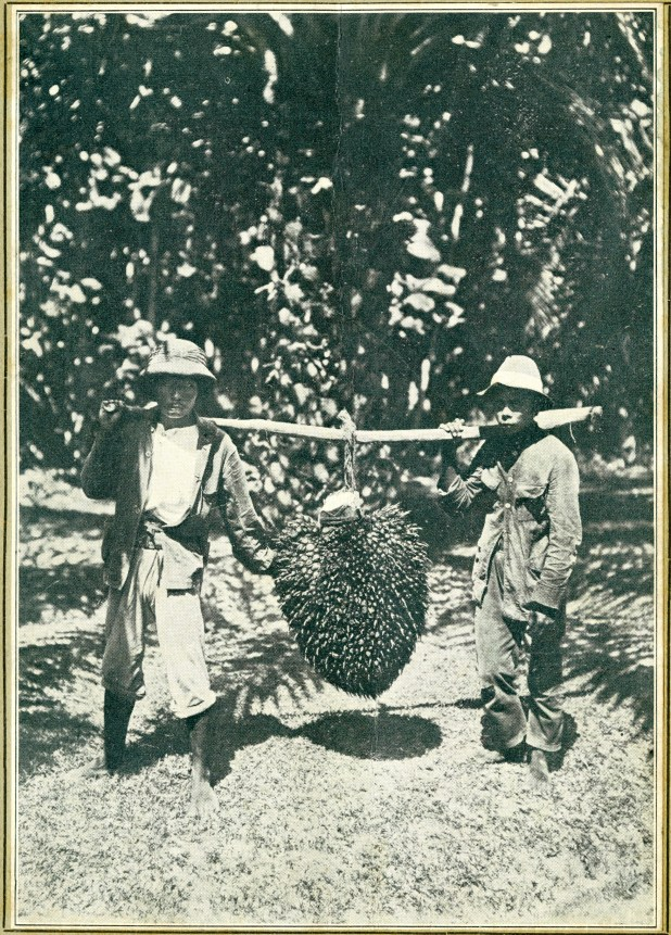 Two men with a large bunch of palm fruit suspended from a pole.