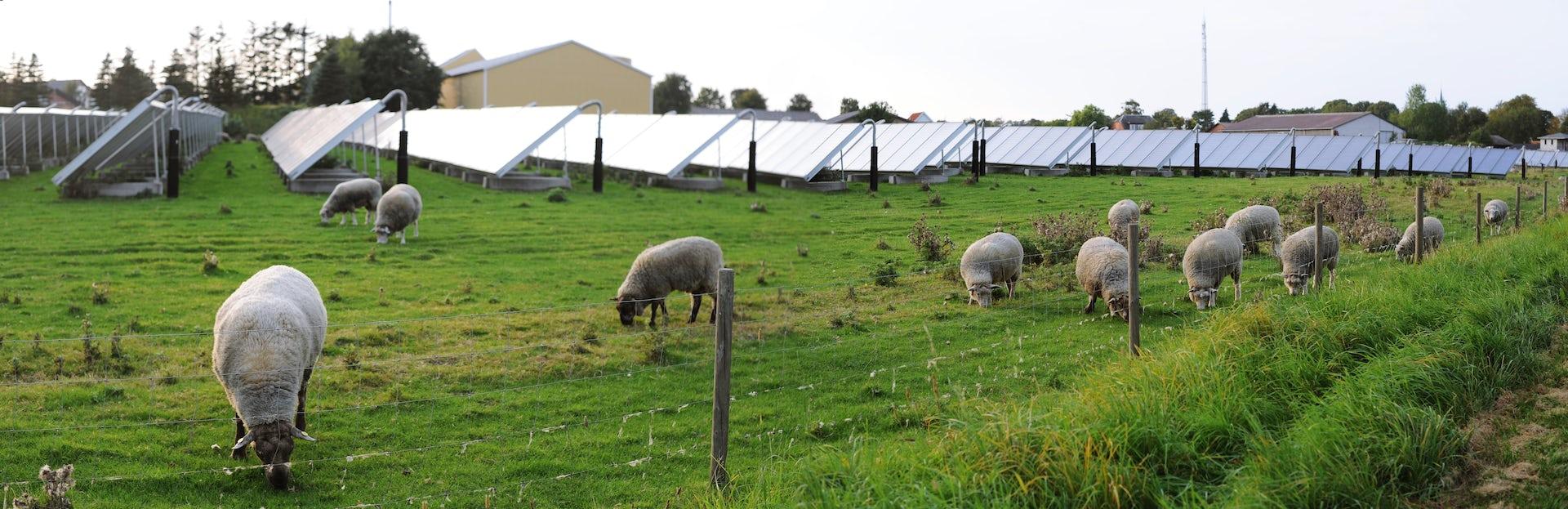 des panneaux solaires sur une ferme