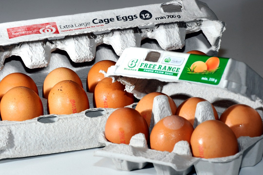 two cartons of eggs - one free-range, one caged