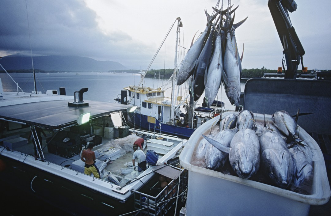 Large tuna fish on the back of a fishing boat