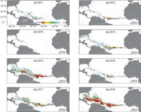 Maps showing sargassum belt across the Atlantic.