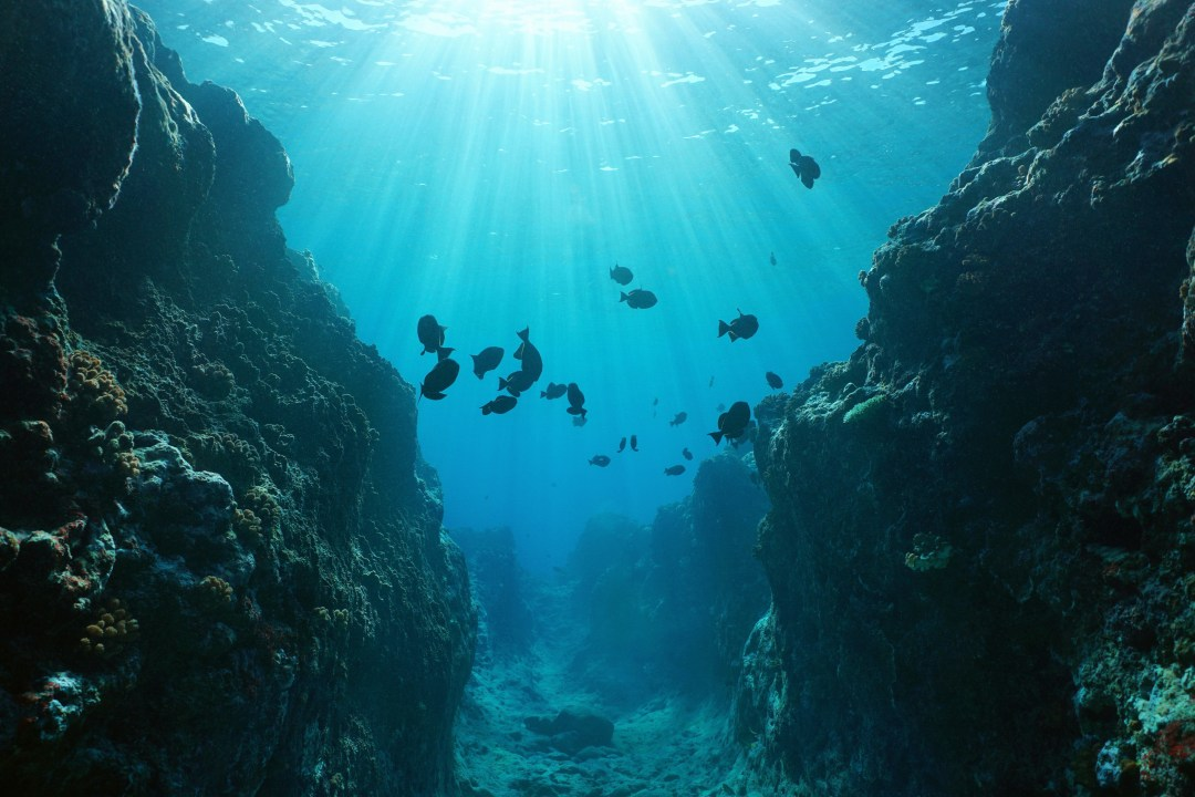 Underwater canyon in the Pacific ocean.