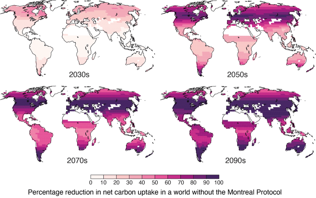 Four different world maps depicting declines in carbon uptake by plants across the 21st century.