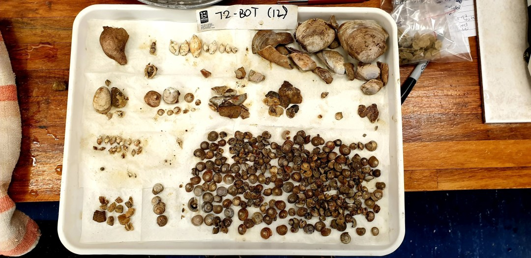 Examples of marine fossils held in New Zealand's fossil collection.