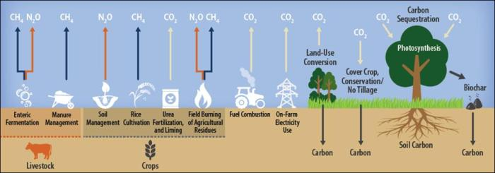 Graphic of agricultural greenhouse gas sources and sinks.