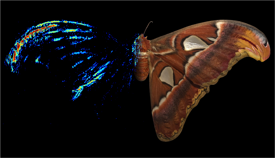 An image showing a moth' forewing tip imaged tomographically