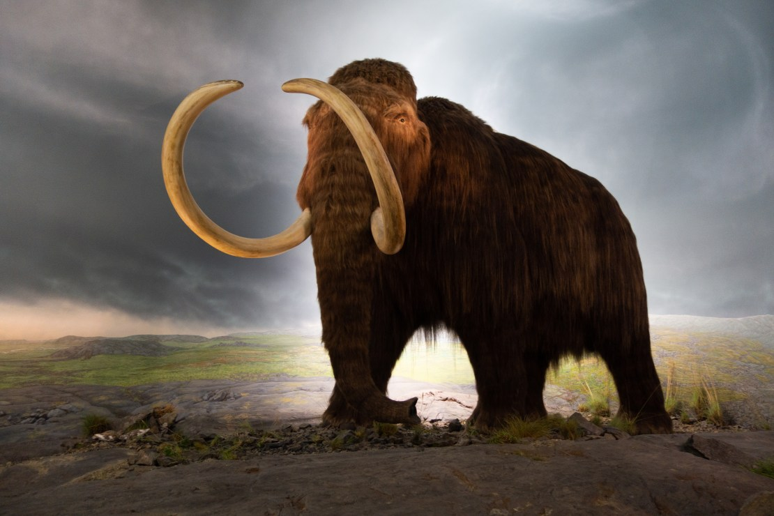 A model of a woolly mammoth