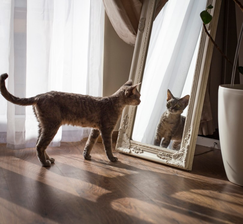 Image of a cat looking in the mirror.