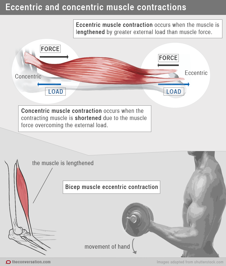 exercise consisting of mainly concentric shortening contractions where muscles contract and are shortened such as walking up stairs and lifting a  [ 1000 x 1179 Pixel ]