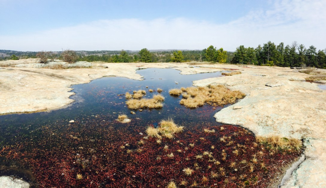 When you do visit arabia mountain, take the time to learn about this monadnock's amazing history—all 400 million years of it. Hike Arabia Mountain Ga Lithonia Georgia