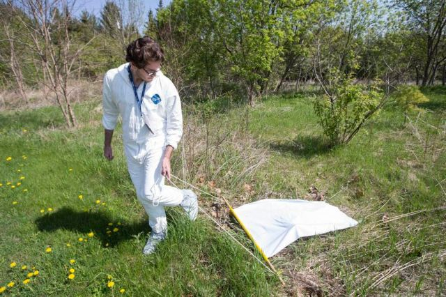 Serban Grigoras drags a white sheet in a grassy area in Rouge Park in a search for black legged ticks. The white sheet makes it easy to spot the tiny insects when they attach to the sheet.