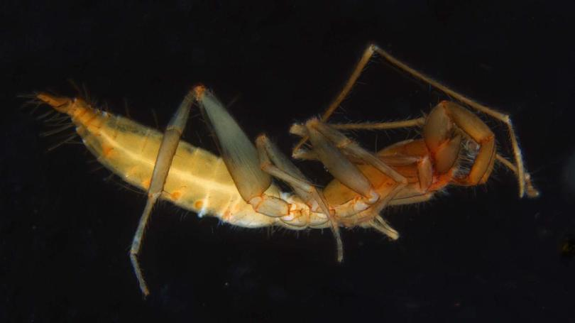 Researchers at the University of WA have discovered 56 new species of arachnids in the Pilbara's Karijini National Park .