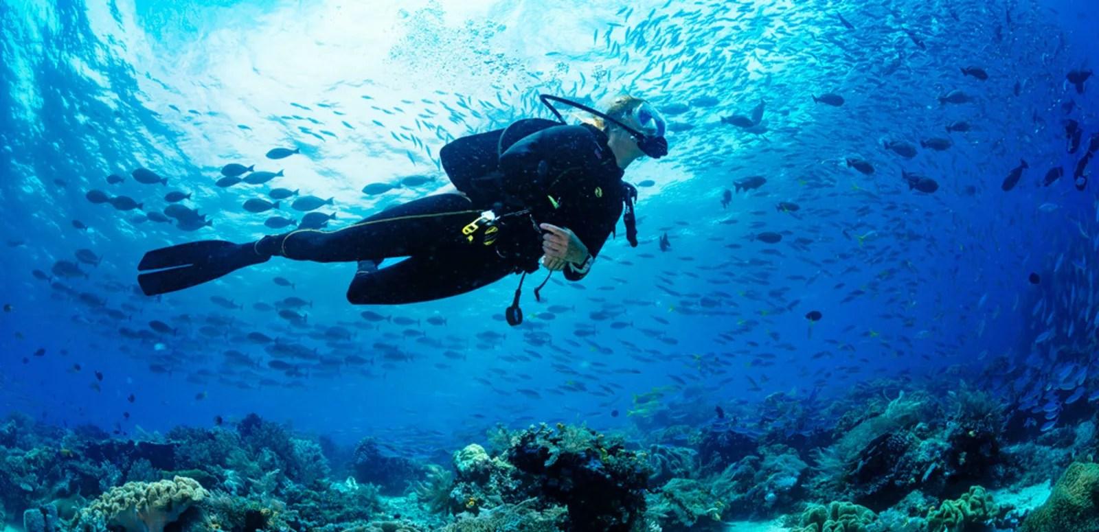 Scuba Diving In Dubai Flat 12 Off