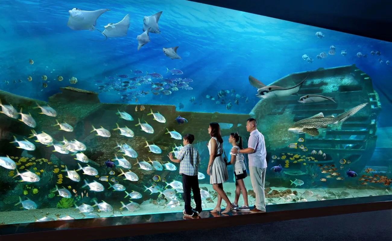 Aquarium Visit In Singapore Thrillophilia