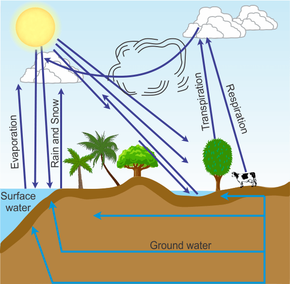 labelled diagram of water cycle hood ansul system wiring i what are the consequences global warming ii draw a in nature
