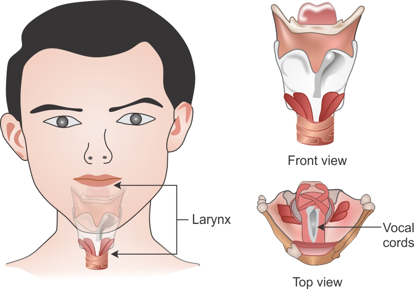 a symple diagram of the voice box and human hearing system ...