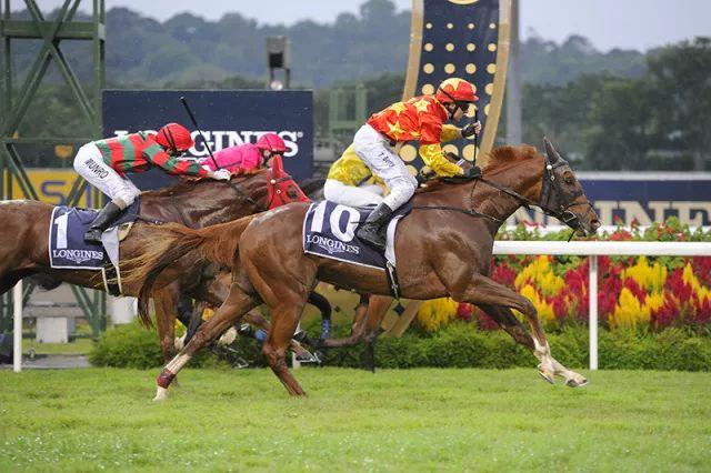 在新加坡賭馬是怎樣一種感受? - 新加坡新聞頭條