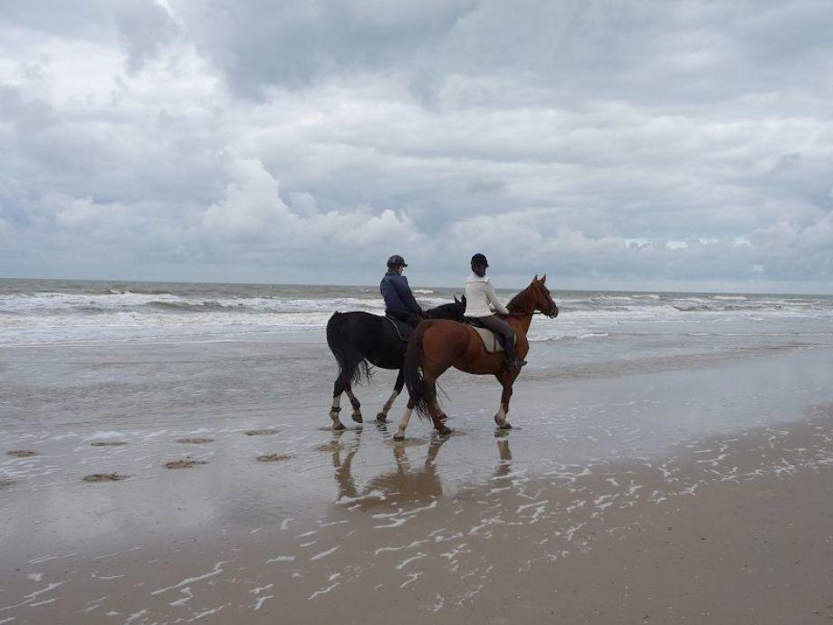 Ferienwohnung Petten Beach in Petten an Zee Nordholland Petten an Zee  Herr Franz Josef Schmitt