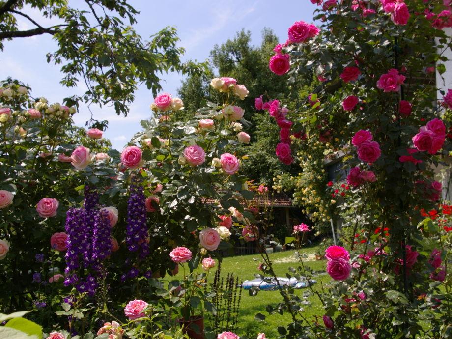 Ferienwohnung Rosengarten im Ilztal Ilzer Land  Frau