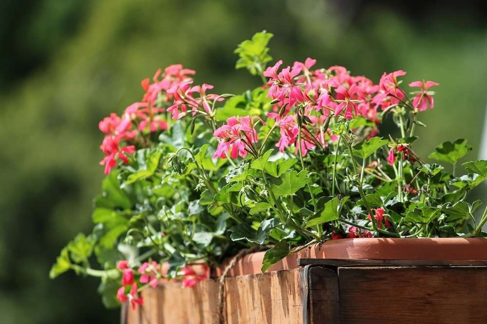 quelles plantes choisir pour le balcon
