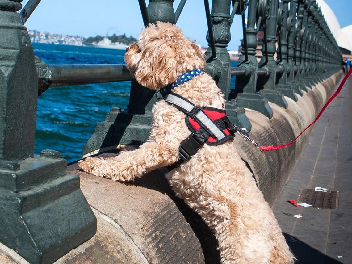 Dog walk Sydney