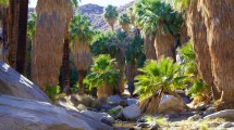 palm springs vacations 2017 package